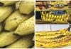 Evitas comer plátanos con manchas oscuras