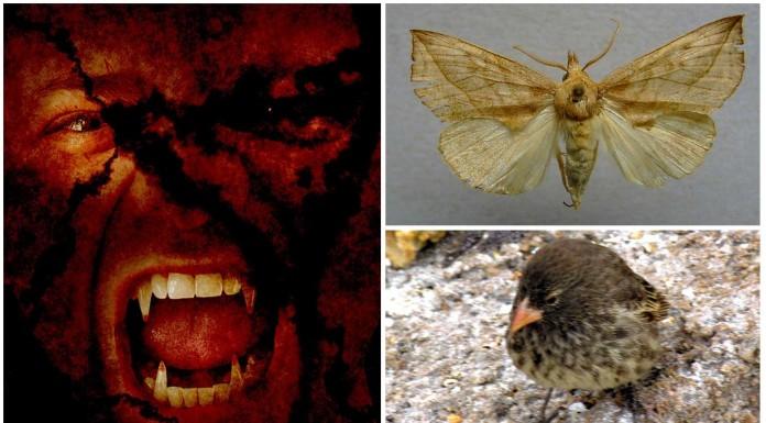 5 animales VAMPIROS que no conocías
