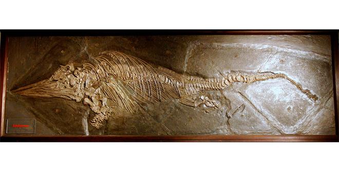 Nuevo fósil plantea la evolución MUCHO más rápida de lo pensado