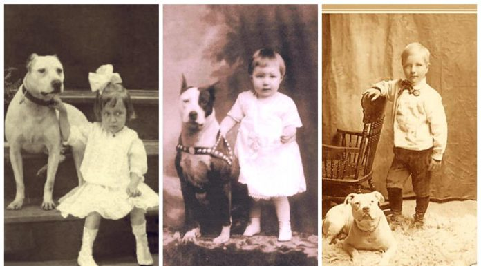 La curiosa historia de los Nanny Dogs