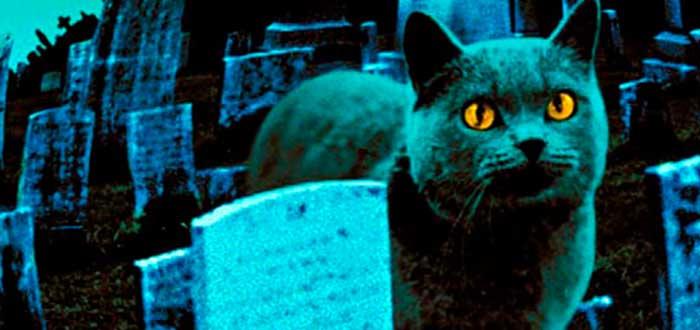 Novelas de Stephen King Cementerio de mascotas