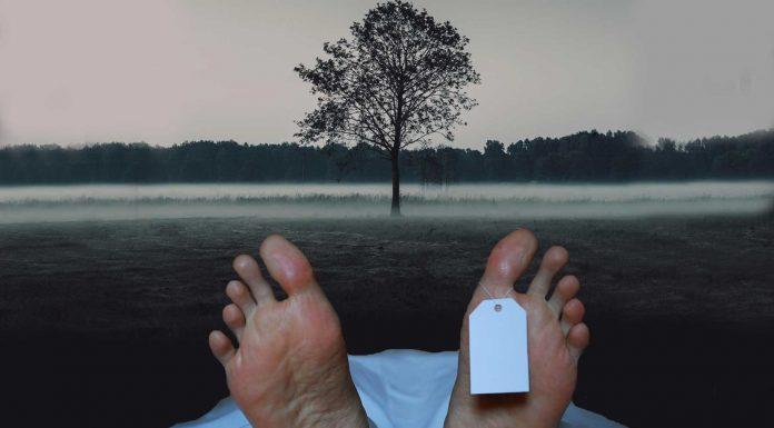 Cremación: 5 alternativas curiosas después de morir