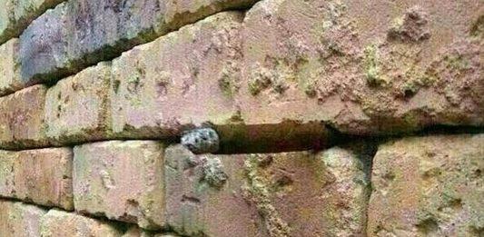 ¿Por qué esta es una pared VIRAL en Internet? ¿Puedes verlo o NO?