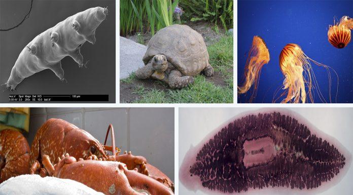 5 animales INMORTALES o casi