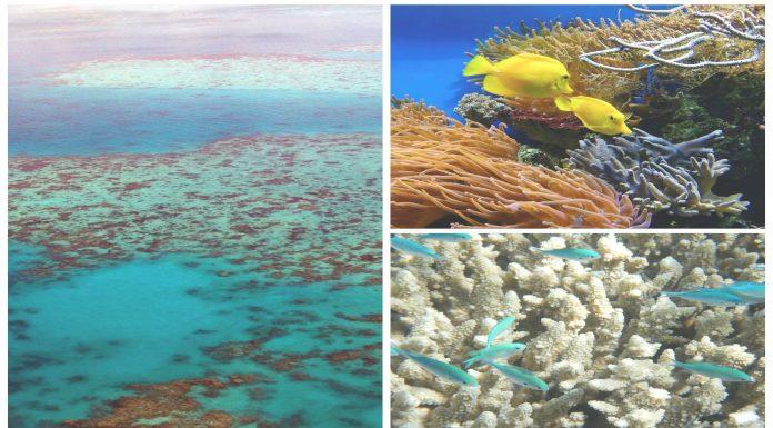 Barrera de Coral blanqueamiento