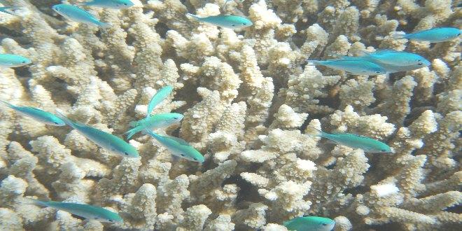Foto Gran Barrera de Coral