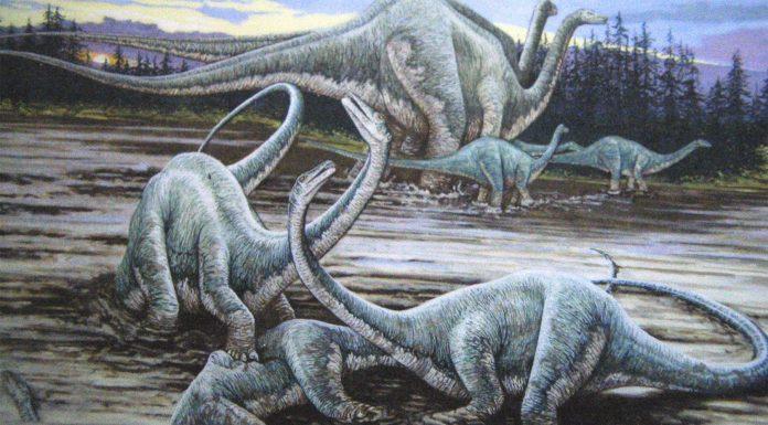La muerte de los dinosaurios pudo comenzar antes de lo pensado