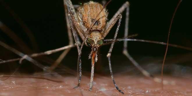 ¿Funcionan los repelentes de mosquitos por ultrasonidos?
