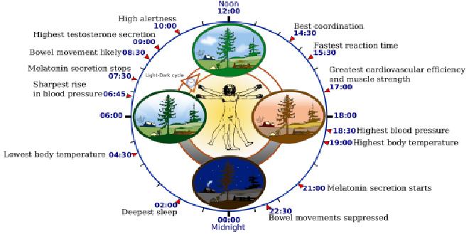 Los ritmos circadianos marcan tu vida. ¿Sabes qué son?