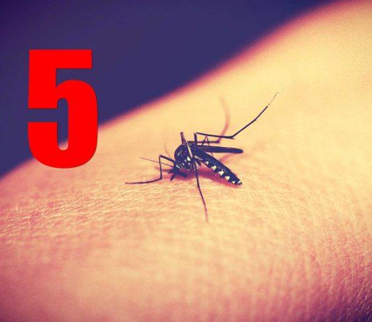 ¡5 cosas que te hacen atractivo para los mosquitos!
