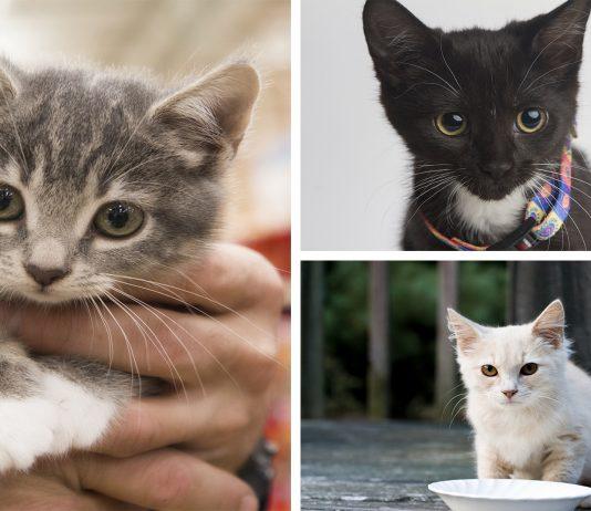 15 cosas que te gustará saber antes de adoptar a un gato