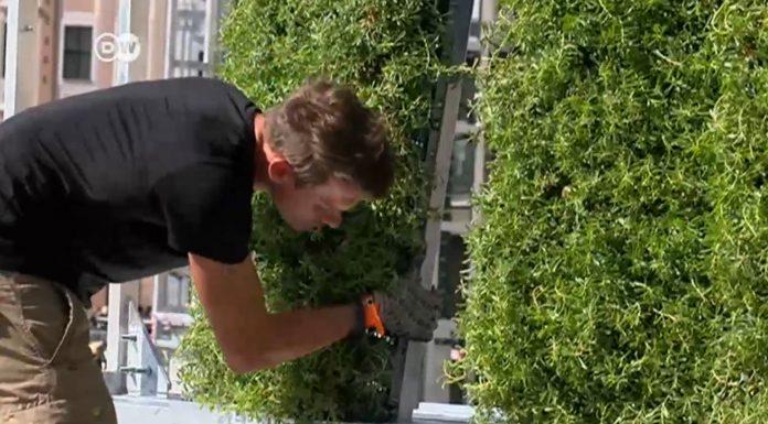 Árboles urbanos contra la contaminación