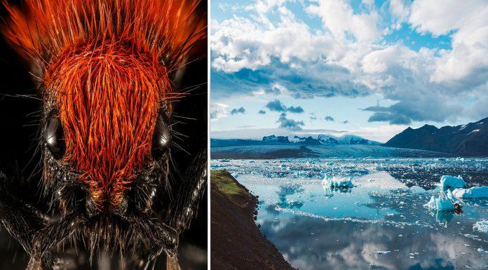 En Islandia NO hay hormigas. ¿Por qué?