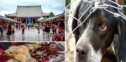 Los 6 festivales más crueles con los animales 2
