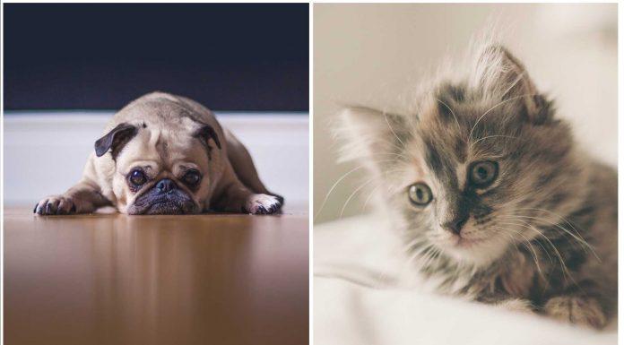 ¿Crees que tu perro o gato está deprimido?