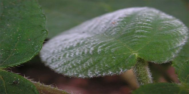 La planta que conduce al suicidio