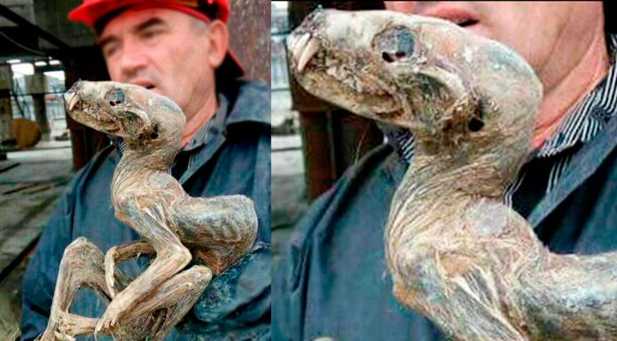 La EXTRAÑA criatura hallada congelada en Siberia