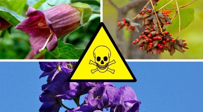 7 plantas letales que quizá no sabías que podían matarte