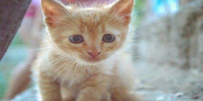 Gatitp: ser más de gatos