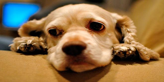 ¿Por qué algunos perros esperan junto a la tumba de sus amos durante años?