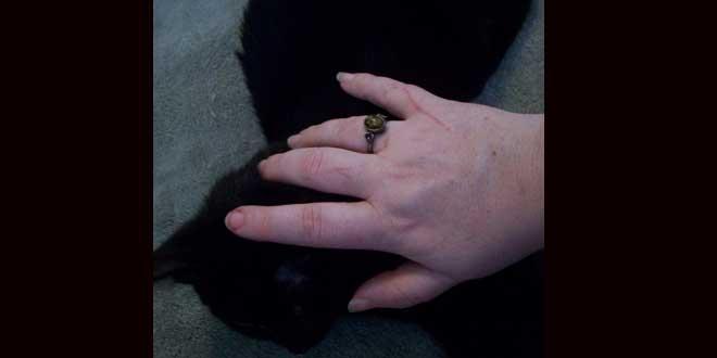 La terrible historia de la bruja Agnes Waterhouse y su gato Satanás