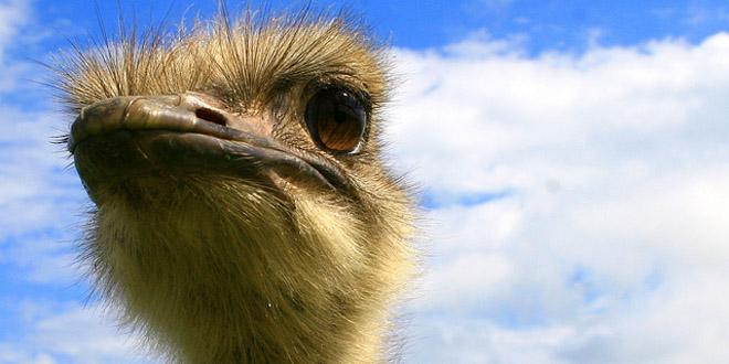 7 absurdos datos sobre animales que NO debes seguir repitiendo