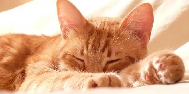 """10 curiosos refranes con """"Gato"""" y su significado ¿Conoces más?"""