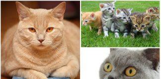 10 curiosos refranes con gato y su significado. ¿Conoces más?