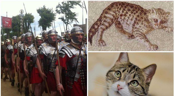 Los gatos que acompañaban a las legiones romanas