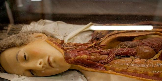 Las escalofriantemente bellas venus anatómicas del siglo XVIII