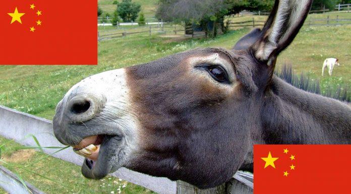 ¿Sabías que China está comprando todos los burros del mundo? ¿Para qué?