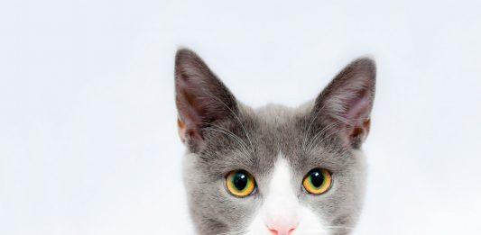 30 fascinantes curiosidades de los gatos