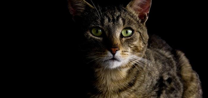 curiosidades los gatos, vista oscuridad