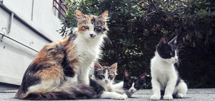gatería, curiosidades de los gatos