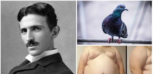 curiosidades de Nikola Tesla