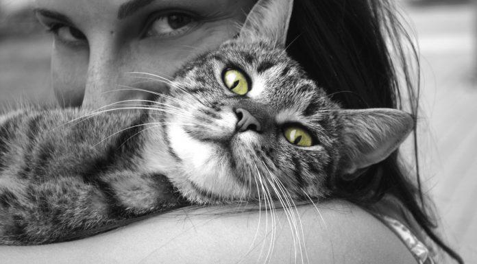 Los gatos dominan a sus dueños, según un estudio. ¿Sabes cómo?