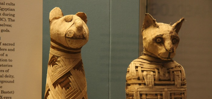 momia-animal