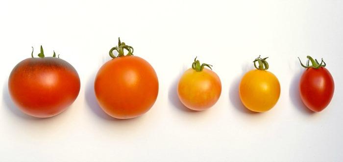 Resultado de imagen de pate aromatico de tomate