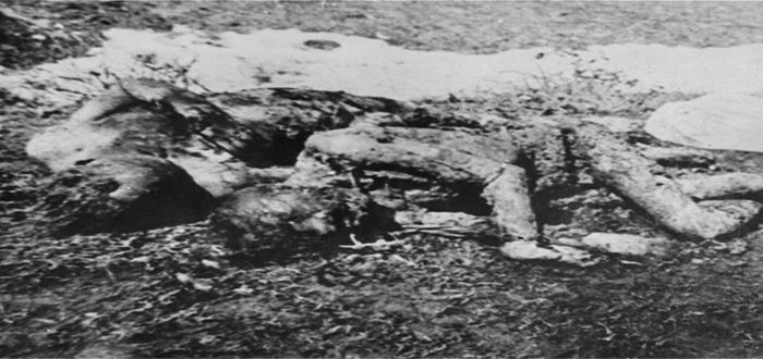 La Ustacha, la siniestra organización terrorista croata que escandalizó a los nazis