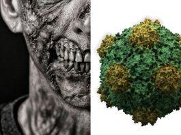 ¿Podría existir un virus zombi? ¿Crear muertos vivientes? ¡Averígualo!