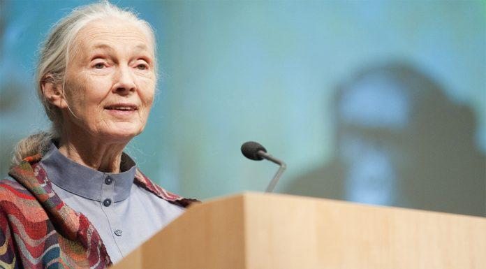 Jane Goodall, la mujer que nos descubrió a los chimpancés