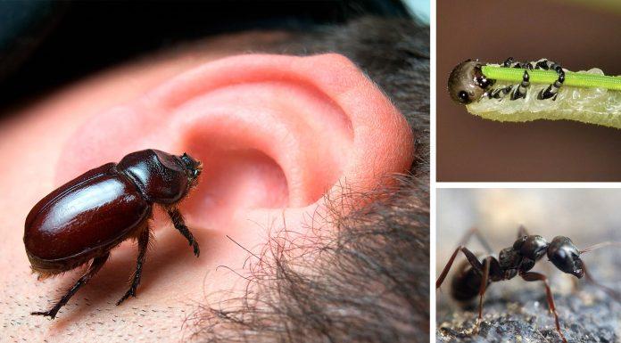 ¿Podría vivir un bicho en un oído? 5 casos espeluznantes