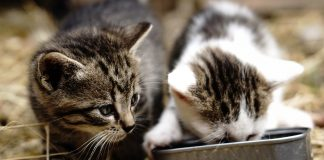 5 Alimentos que los gatos no deben comer