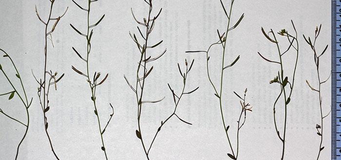 ¿Que si las plantas pueden ver...? Nuevas evidencias que te sorprenderán