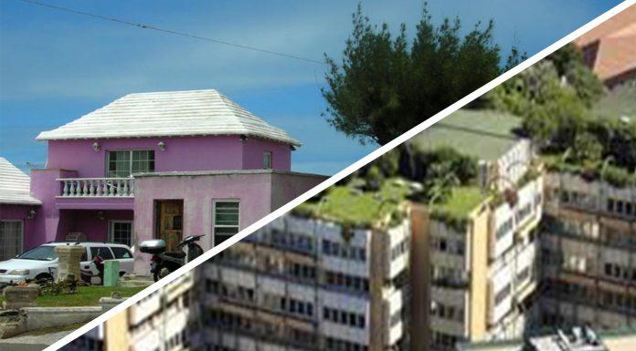 Descubre estas iniciativas de techos ecológicos, ¡increíbles para vivir mejor!