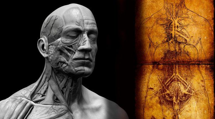 Identificado un NUEVO órgano del cuerpo humano