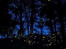 El santuario de las luciérnagas en México