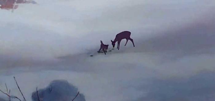 madre de bambi