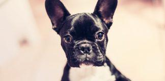 Top 3: Perros más famosos de Instagram. ¡Síguelos! - Supercurioso