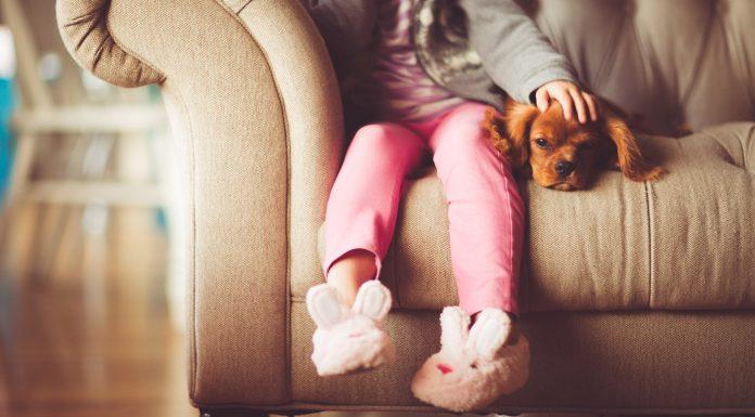 7 razones por las que los perros son las mejores mascotas